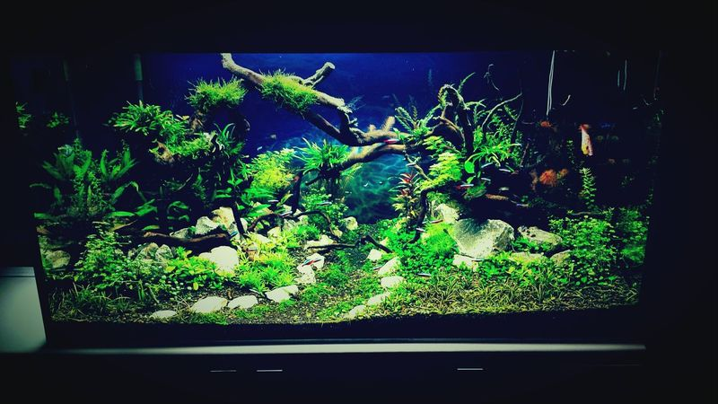 Aquascape Hi! ♡ Peace ✌