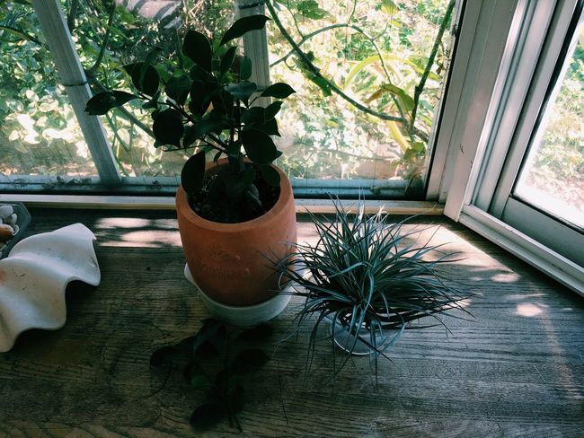 Vscocam Plants Airplants Banyan Tree Tillandsia