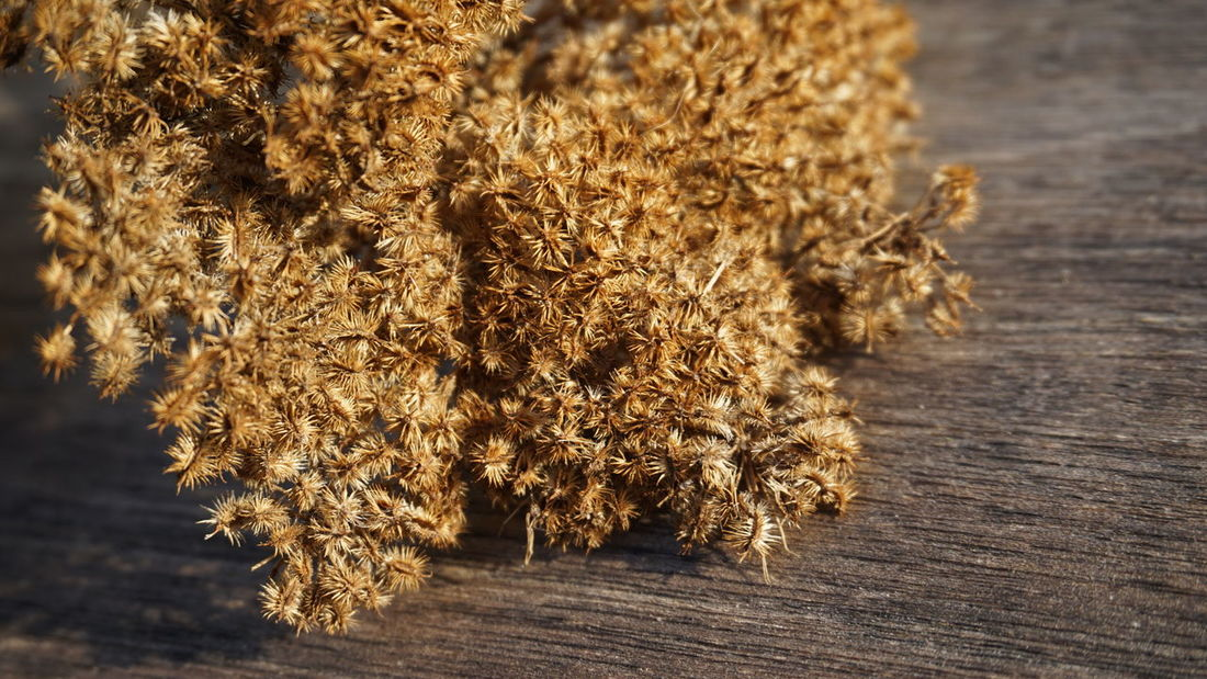 Dried carrot flowers Carrot Flowers Seeds EyeEm Selects Close-up Dried Dried Plant Dry