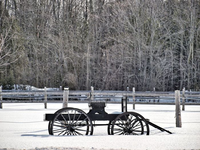 who wants a ride... Sleigh Carriage Cariole Snow Winter Tree Cold Temperature Weather History Nature Tranquility Outdoors No People Lake Beauty In Nature Day Scenics Water