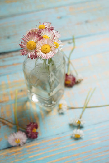 Flower Plant Petal Flower Head Glass - Material Daisy Glass High Angle View Close-up Container Freshness Pollen Flower Arrangement