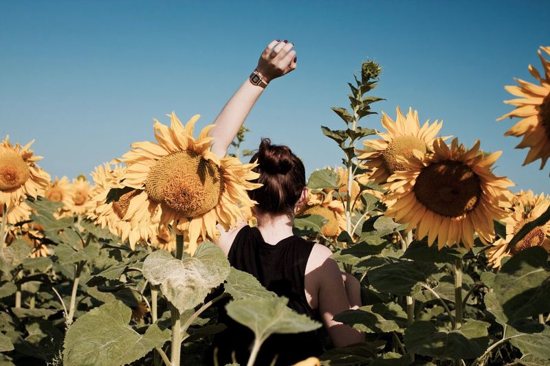 Woman on sunflower field