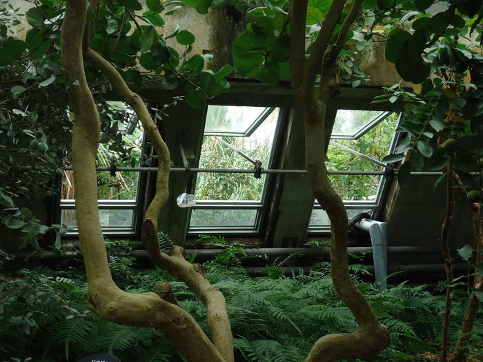 Architecture Beauty In Nature Branch Close-up Day Green Color Growth Indoors  Nature No People Plant Tree