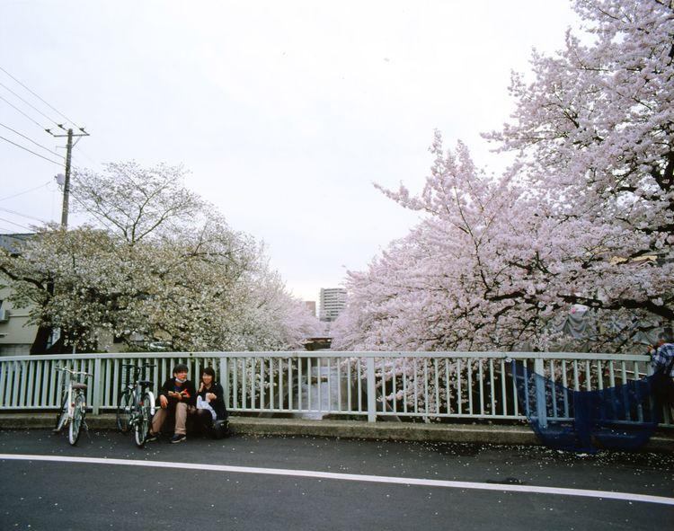 PENTAX67 Color Reversal Film Sakura2016