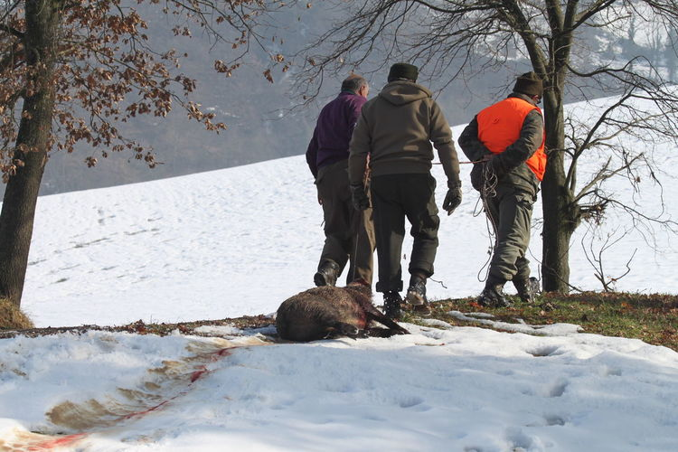 Rear View Of Hunters With Wild Boar Walking By Snow Covered Field