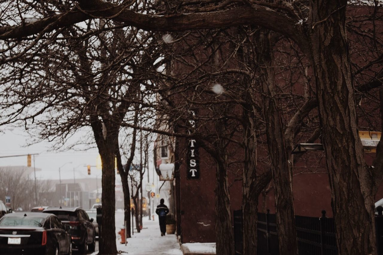 architecture, building exterior, tree, city, mode of transportation, transportation, built structure, land vehicle, motor vehicle, car, snow, street, winter, bare tree, road, plant, nature, cold temperature, building, outdoors, snowing