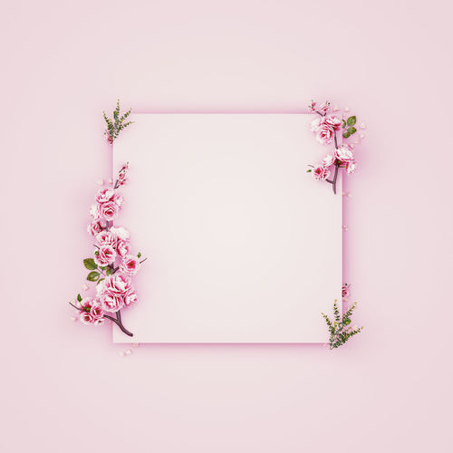 Pink flowering plant against white background