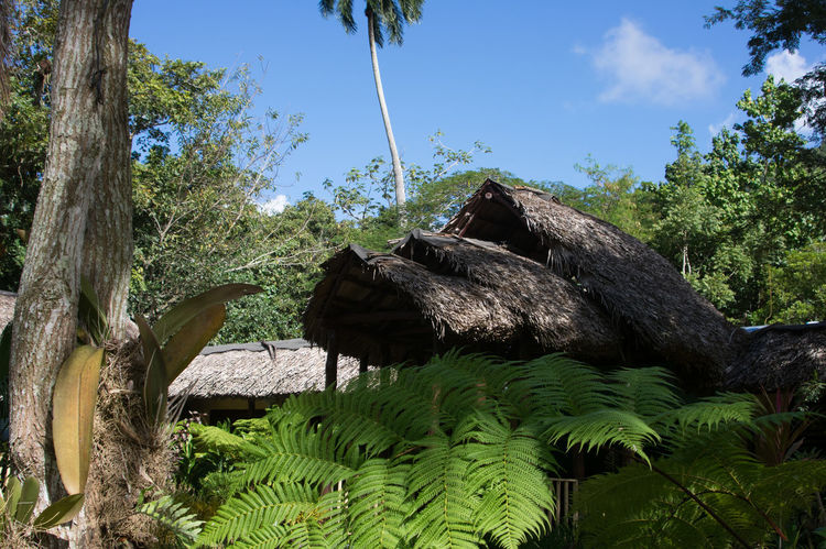 2016 Alturas De Banao Beauty In Nature Clear Sky Clouds And Sky Variation Cuba Cuba Collection Day Green Color Huts Nature Nature No People Outdoors Palm Plant Sky Tourist Destination Travelling Photography Tree Tree Tree Trunk