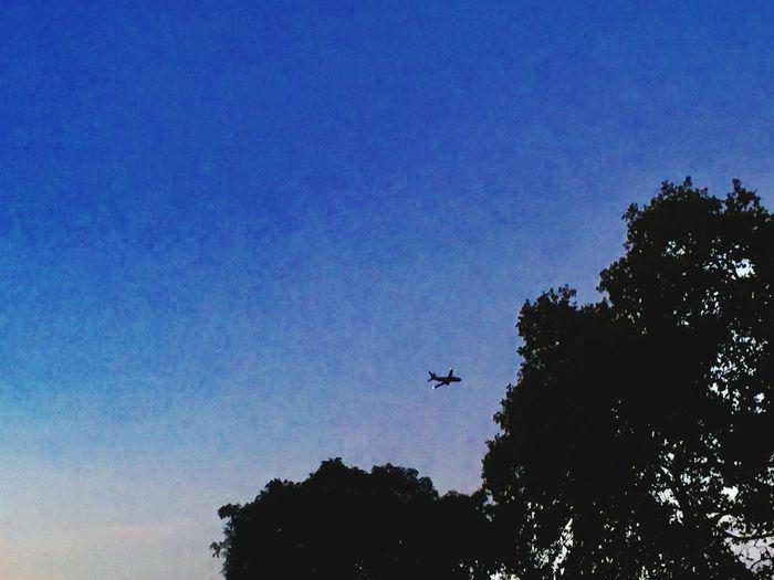 Plane Sky Tree Flying Plant Low Angle View Silhouette Animal Themes Animal Bird Animal Wildlife