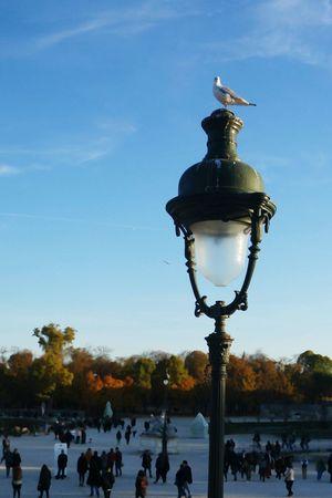 Bird Lampadaire Park Paris, France