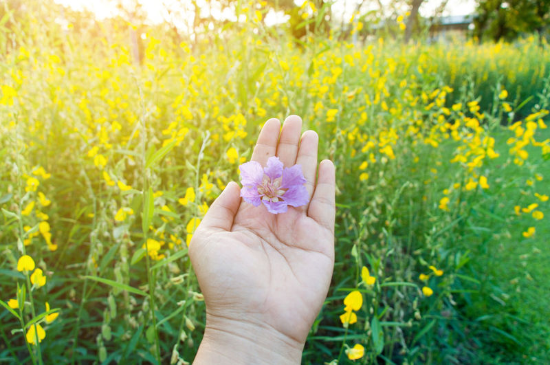 Person Holding Flower In Field