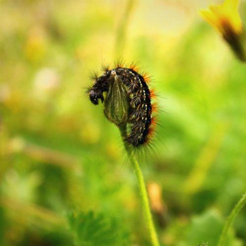 A Bug's Life - A caterpillar eating - Om nom nom nom nom - Photography Colors Naturelovers Nature EyeEm Gallery Enjoying The Sun Lebanon EyeEm Nature Lover EyeEm Beautiful