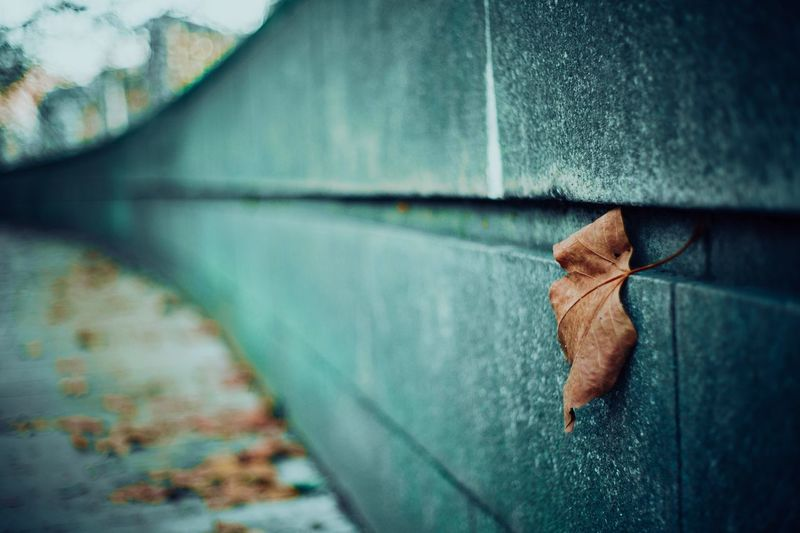 Leaf on a wall Street Photography Streetphotography One Person Jeans Close-up Human Leg Human Body Part Leaf Day Real People Plant Part Body Part Casual Clothing Blue Unrecognizable Person Selective Focus Lifestyles Nature Textile Men Human Limb