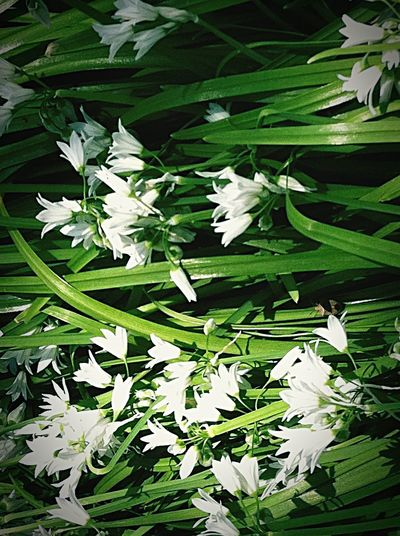 White flowers growing on plant