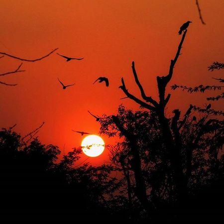 Thol Thol Ahmedabad Gujarat Sunset Nature Landscape Canonsx50 Bird Photoarena_nature Naturephotography India