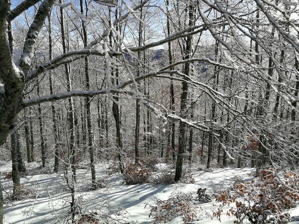 Ice Pratomagno Toscana Trekking Tuscany Winter Wood Adventure Beauty In Nature Casentino Cold Temperature Mountain Nature No People Outdoors Snow Tranquility Tree Valdarno