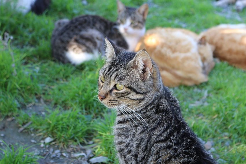 Cyprus Larnaca, Cyprus Larnaca Nature Photography Nature_collection Cat Lovers Cat♡ Cats Group Of Animals Domestic Cat Animal Themes Feline Mammal Pets Domestic Animals Cat One Animal Portrait Looking At Camera Grass No People Day Whisker Sitting Outdoors Ginger Cat Close-up Nature