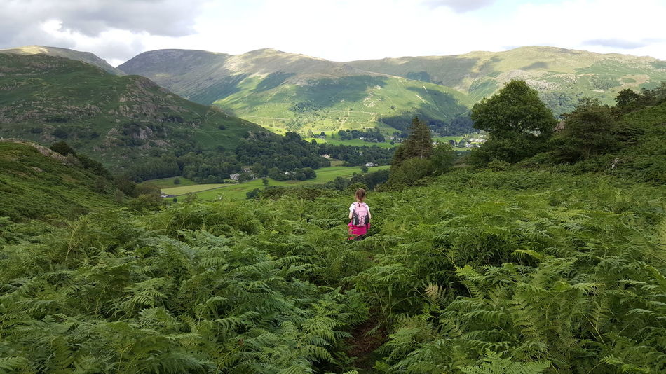 Cumbria Uk Ferns Green Landscape Natural Beauty Valley Colour Of Life No Filter No Effects