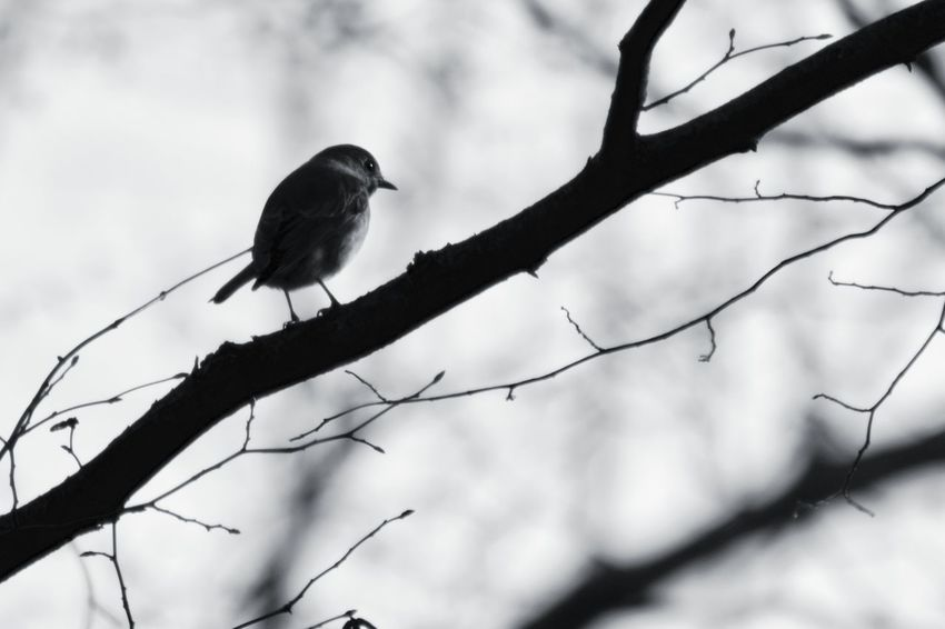 Bird One Animal Animal Wildlife Animals In The Wild Perching Songbird  Nature Beauty In Nature Outdoors Branch No People Tree Nature Tree Fall Woods Forest Nature Photography Cold Temperature Lake Tree Trunk Nature_collection Naturelovers Naturephotography Trees And Sky