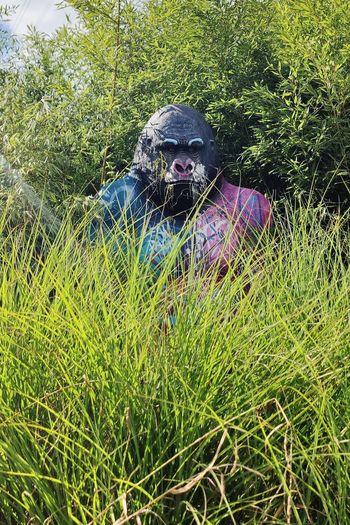 Portrait of man in field