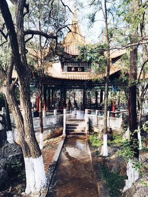 Colorful Beautiful Relaxing Trees Light And Shadow Enjoying Life Beautiful View Good Mood Quiet Moments First Eyeem Photo EyeEm Best Shots New Perspective Of Life  IPone 6 Plus Light Green Taiji China Temple