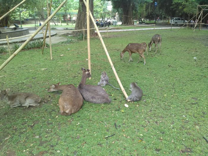 Deer and Monkey have a meeting Animal Animal Family Animal Themes Animal Wildlife Animals In The Wild Day Domestic Domestic Animals Field Grass Green Color Group Of Animals Land Mammal Medium Group Of Animals Nature No People Pets Plant Vertebrate Young Animal