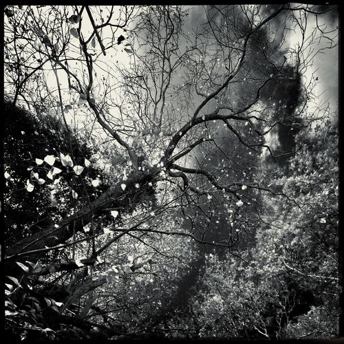 in the garden beneath the sky under the trees Tree Hipstamatic Infared Thailand Blackandwhite B&w Nature Low Angle View Sky No People Midsummer Day B&w Photography Sunnyday Suburban