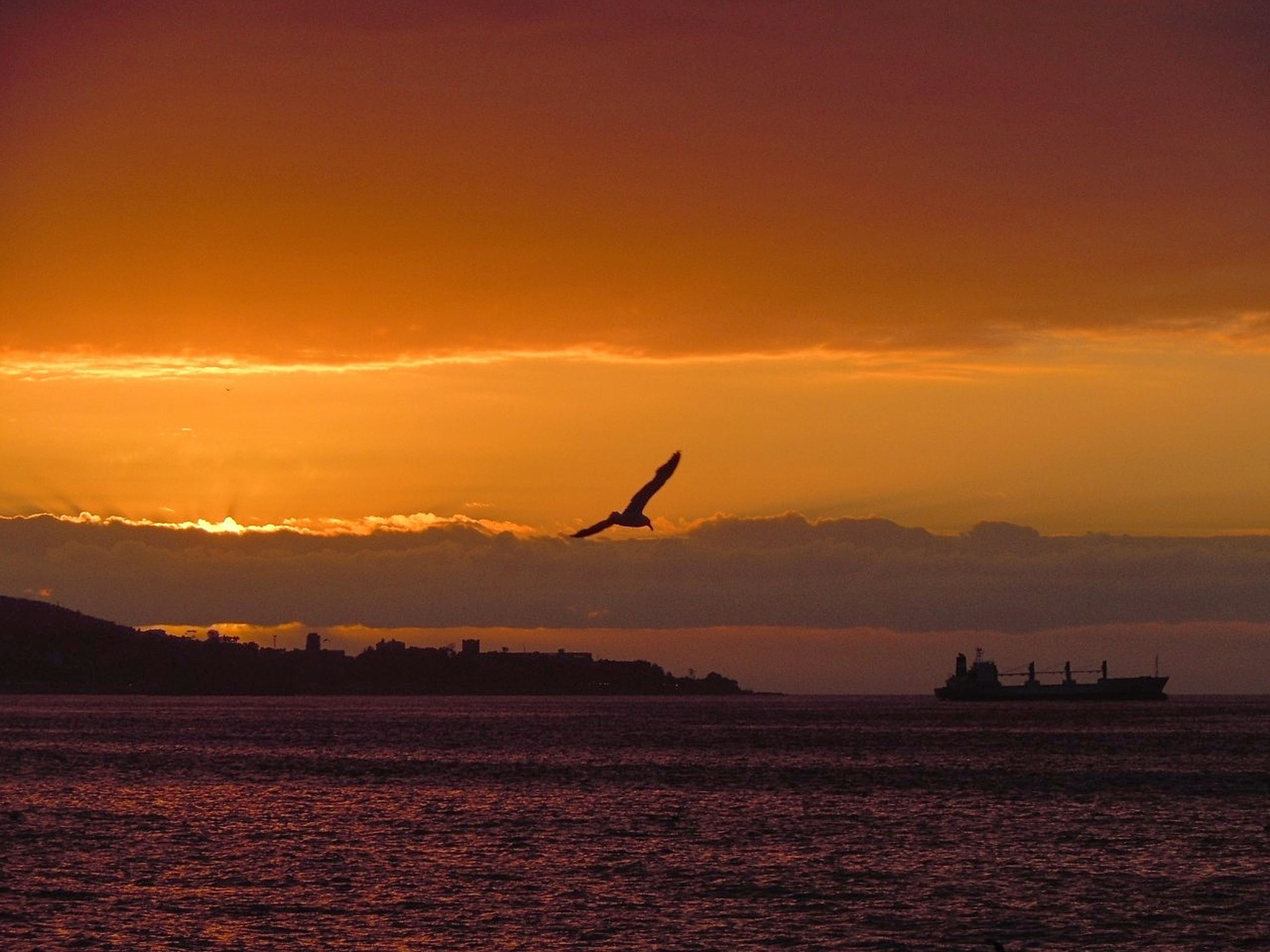 sunset, sky, animal themes, bird, vertebrate, animal wildlife, water, animal, animals in the wild, orange color, silhouette, scenics - nature, one animal, beauty in nature, flying, sea, cloud - sky, waterfront, mode of transportation, no people, outdoors