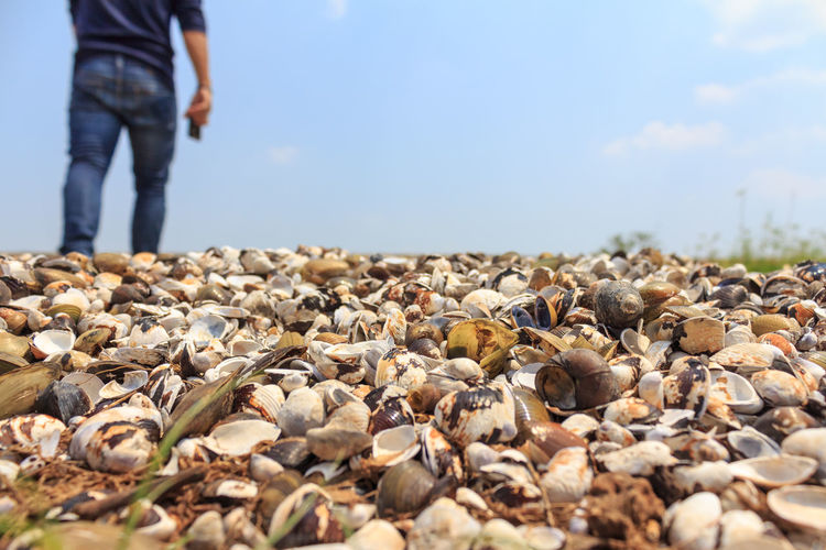 Close-up of seashells with person in background against sky