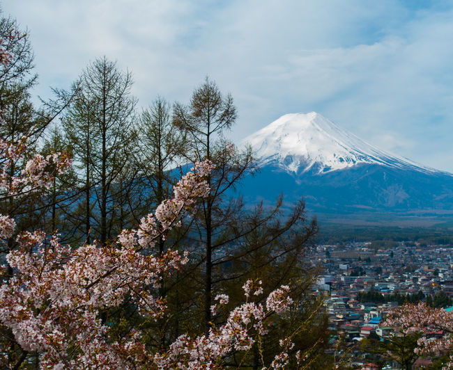 Japan Kawaguchiko Sakura Architecture Beauty In Nature Cherry Blossom Cloud - Sky Cold Temperature Day Environment Flower Flowering Plant Growth Landscape Mountain Mountain Peak Nature No People Outdoors Plant Sakura Blossom Scenics - Nature Sky Snow Snowcapped Mountain Spring Tree Winter