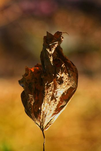 Close-up of dried plant against blurred background