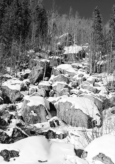 Nature Rocky Mountain National Park Rock Formation Mountains Snow Colorado Tree Sunny Bear Lake Winter Cold Scenic Scenery Black And White Outdoors