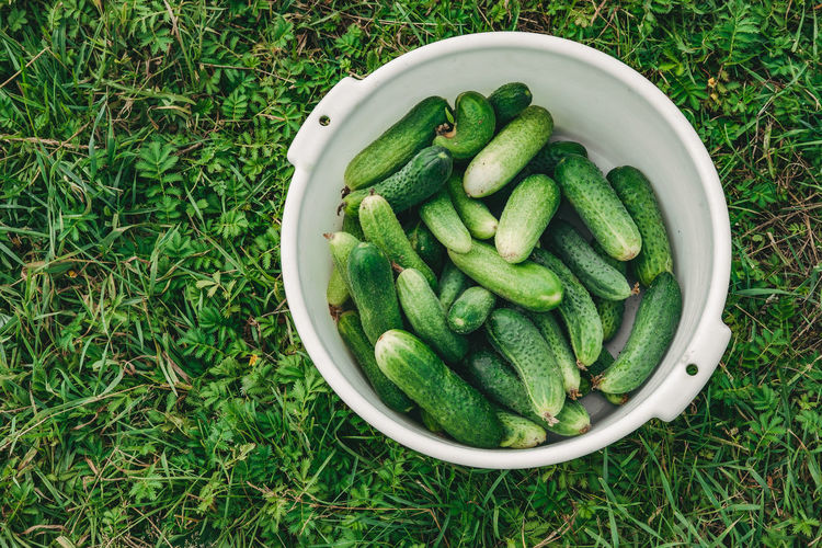 Bowl of cucumbers on the grass. good harvest of cucumbers