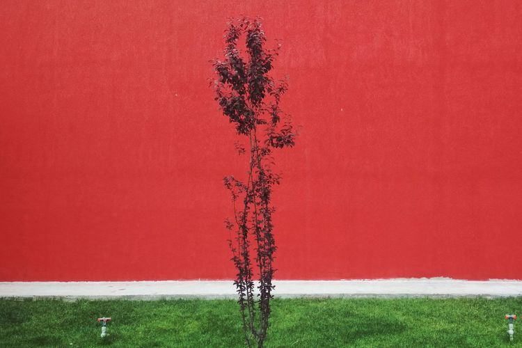 tree Graphic Architecture Minimalism Lines Tree Soccer Field Red Grass Green Color Plant Growing Young Plant