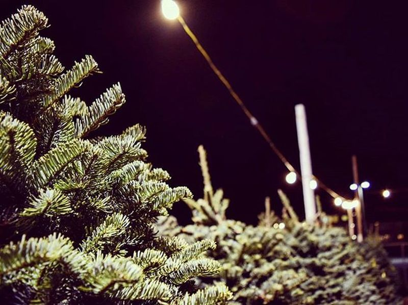 🌲merry & bright💡 ChristmasTrees Christmas Xmas Christmastree Treelot Lights MerryChristmas Merryandbright Holidays Sanfrancisco SF Sflife Sanfranciscochristmas Bayarea IgersSF AlwaysSF Onlyinsf Nowrongwaysf Ca_shooterz Sf_insta Instagood Photooftheday Photography Photographylovers Photgraphyislifee photographysouls nikonphotography nikond3300