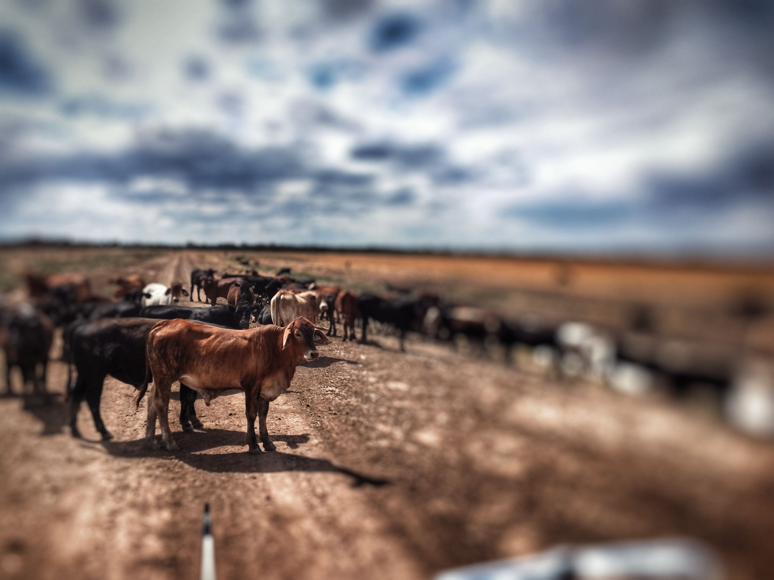 animal themes, domestic animals, mammal, livestock, sky, horse, cloud - sky, working animal, one animal, herbivorous, cloudy, field, cloud, standing, two animals, landscape, nature, cow, day, domestic cattle