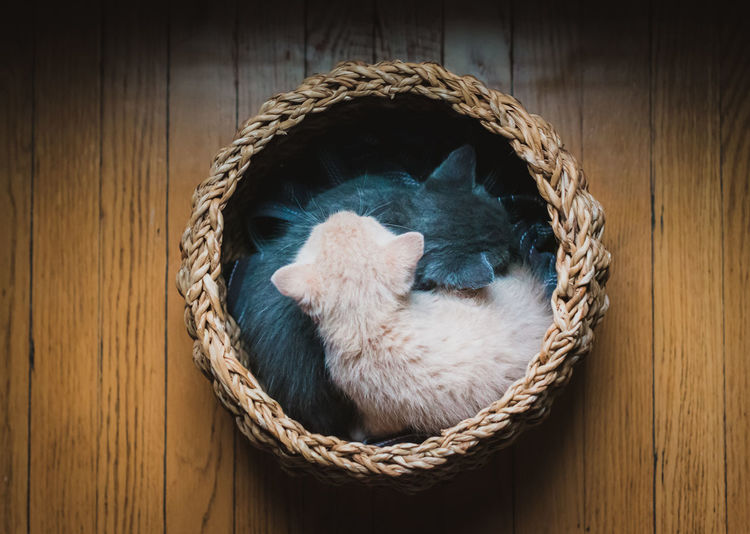 High angle view of a cat in basket
