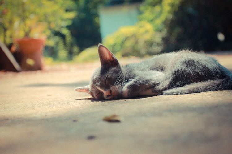 Cat lying on ground