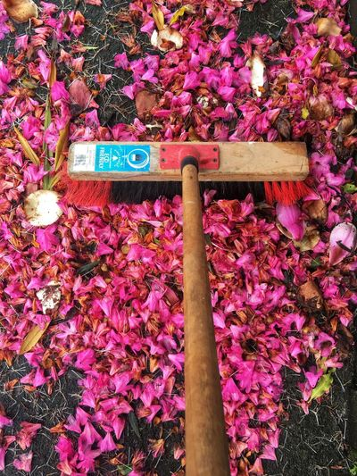 Sweeping up pink flowers with a broom Flower Pink Color Outdoors Flower Head Broom Sweeping Up Outdoor Broom Flowers On The Ground