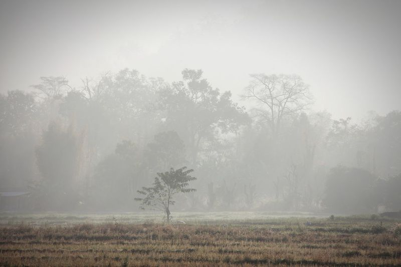 Foggy Morning Trees Landscape Outdoors No People Fall Season Autumn Countryside Calm Nature in North Thailand South East Asia