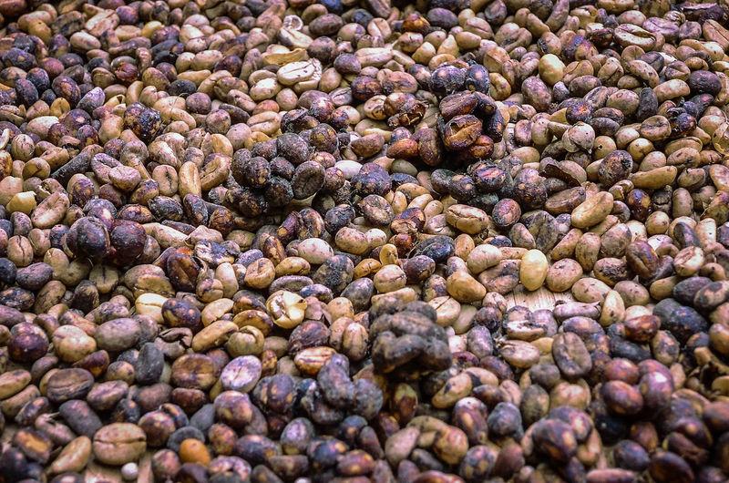 Full frame shot of raw coffee beans