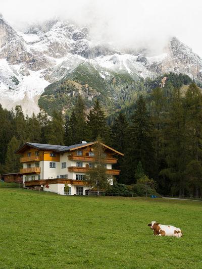 Alpen Austrian