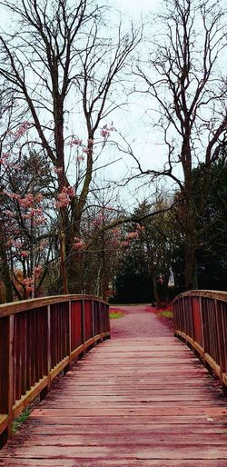 Die Brücke am Fluss... Stadtpark Werne A.d. Lippe Ruhrgebiet Nature On Your Doorstep Winter EyeEm Best Shots My Way Bridge Tree The Way Forward Outdoors No People Day Bare Tree Beauty In Nature Tranquility Footbridge Growth Branch Scenics Tranquil Scene Nature Walkway EyeEm Ready