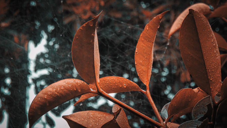 Close-up of wet leaves during autumn