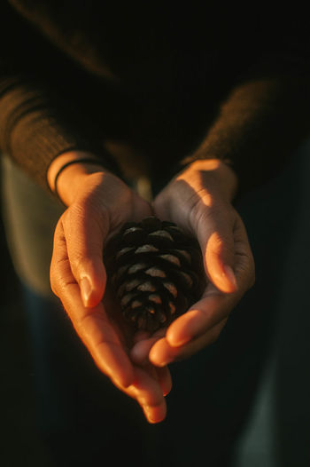Midsection Of Woman Holding Pine Cone In Darkroom