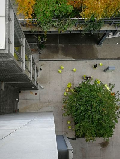 High angle view of plants growing by building
