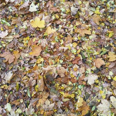 Crunchy Leaves under foot Autumn Fall Stockport