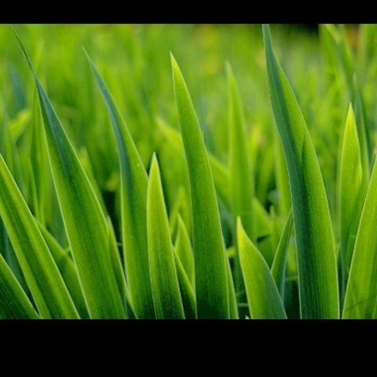 #day24 #grass #aprilphotochallenge