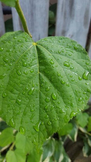 Raindrops Leaf Green Color Nature Water Drop Raindrops RainDrop Rain Summerrain Beauty In Nature Outdoors Plant Wet