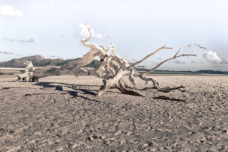Driftwood on desert against sky